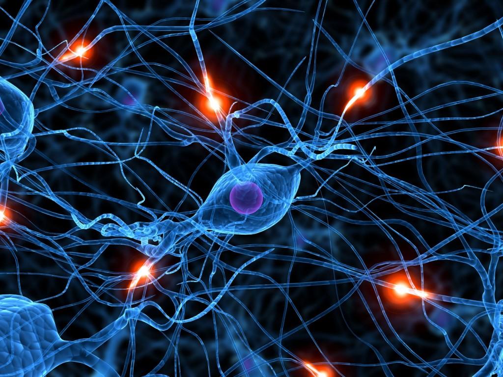 conexion-neuronal